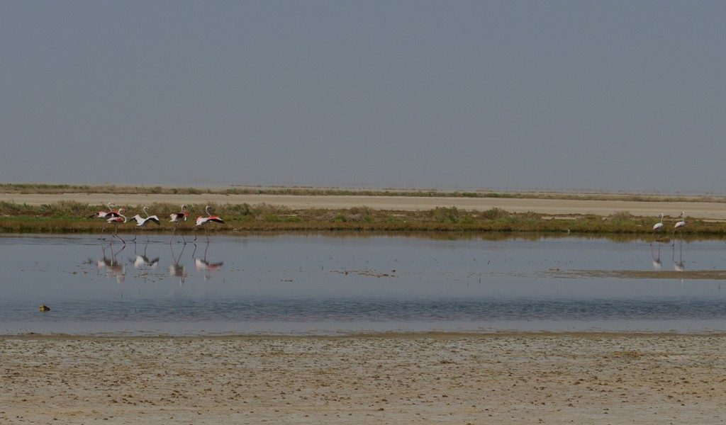 Flamingo's spotten in Iran